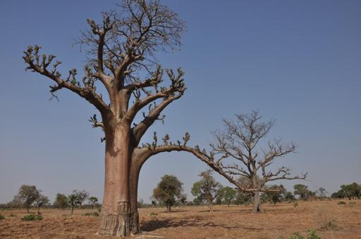 Au Burkina Faso