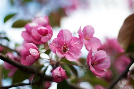 Le renouveau du printemps