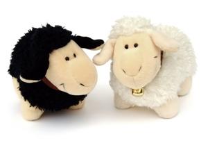 De quelle couleur est votre mouton ?